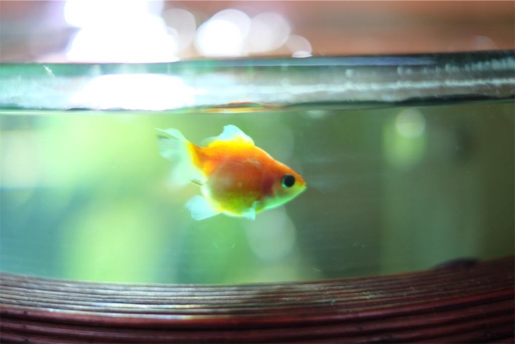 f:id:prettyfish:20170329201620j:image