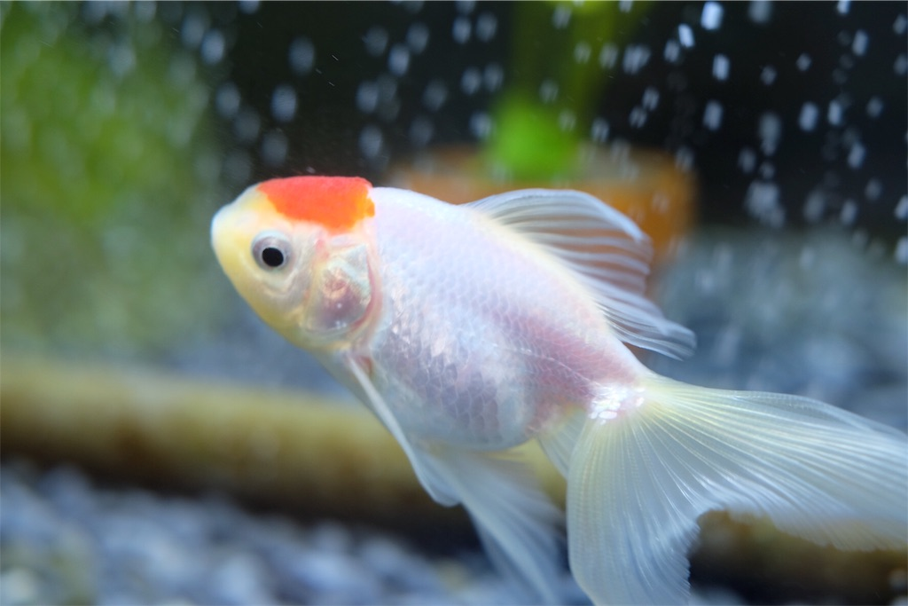 f:id:prettyfish:20170329201655j:image