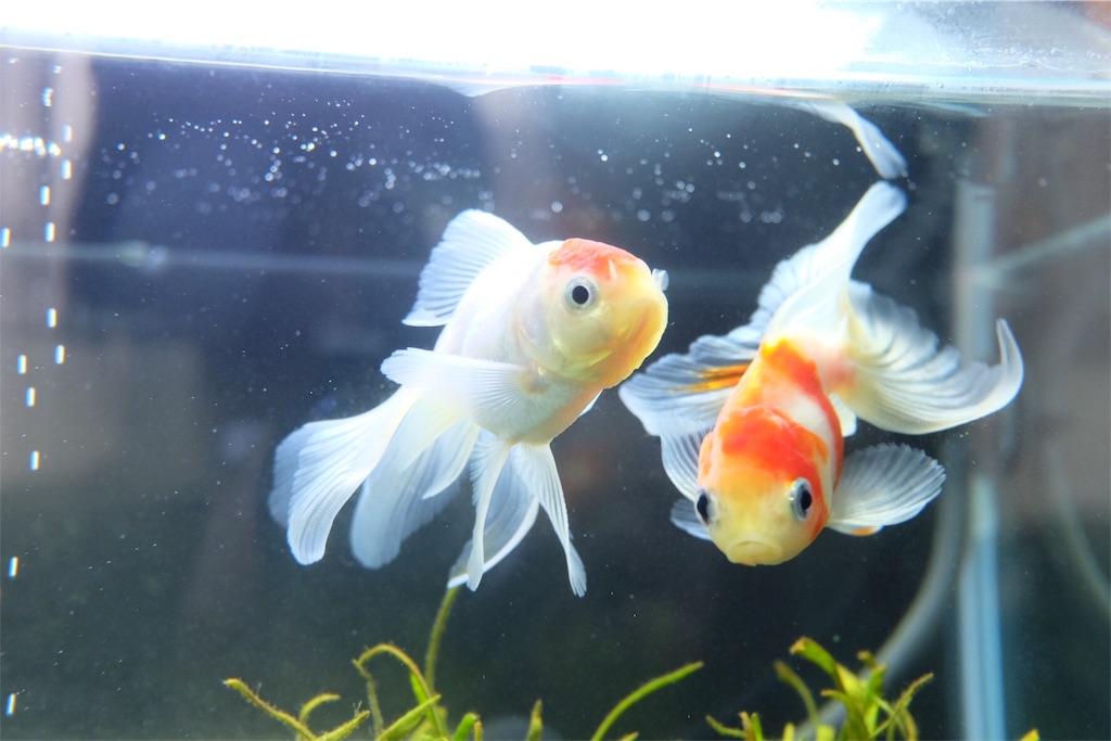 f:id:prettyfish:20170329201953j:image