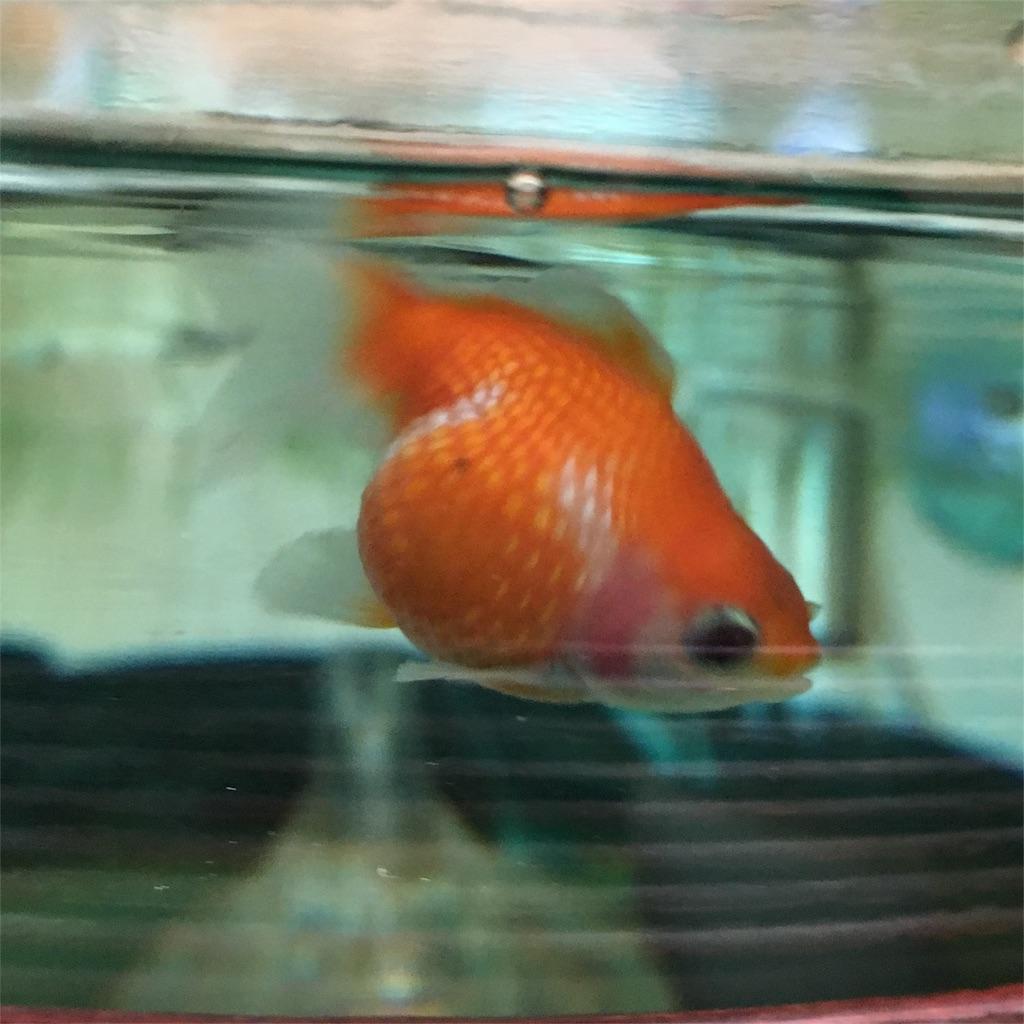 f:id:prettyfish:20170403093409j:image