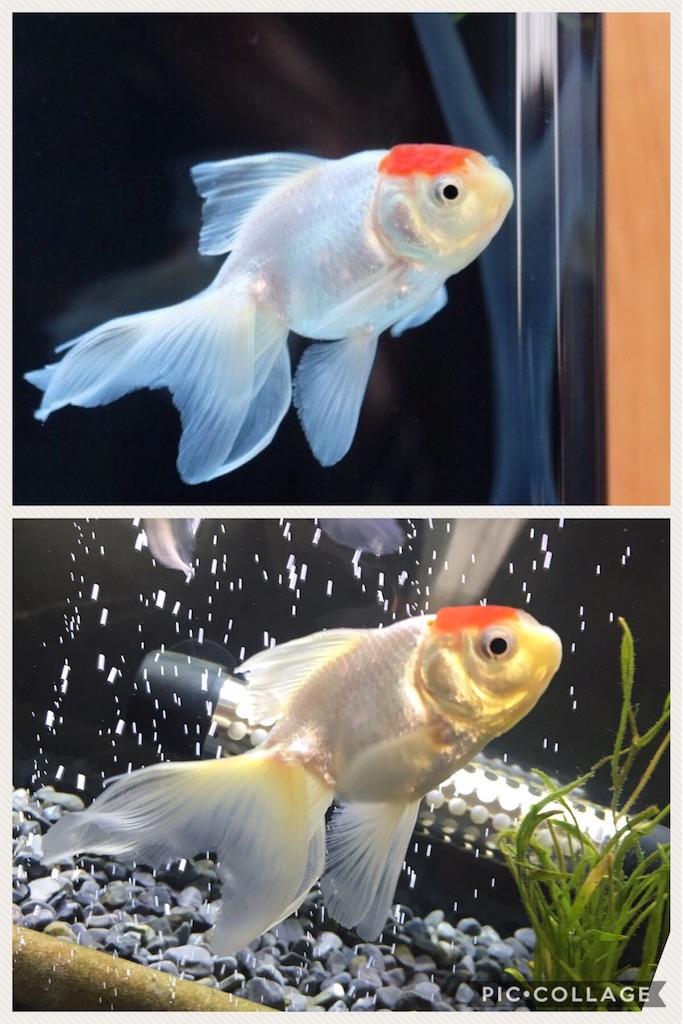 f:id:prettyfish:20170404084130j:image