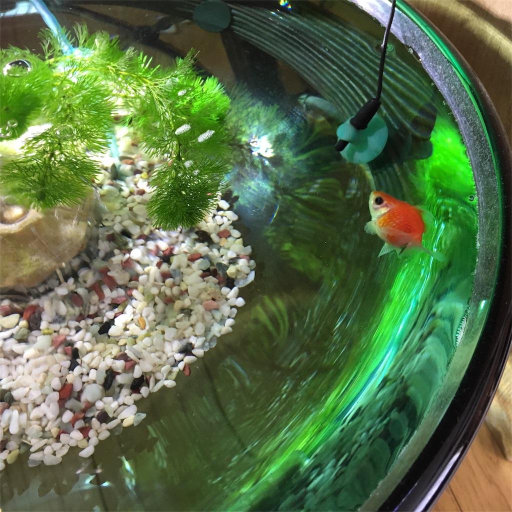 f:id:prettyfish:20170407222010j:image