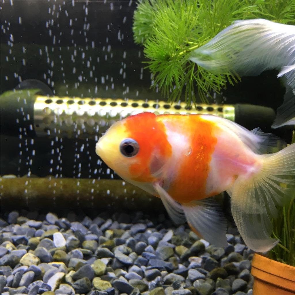 f:id:prettyfish:20170408143215j:image