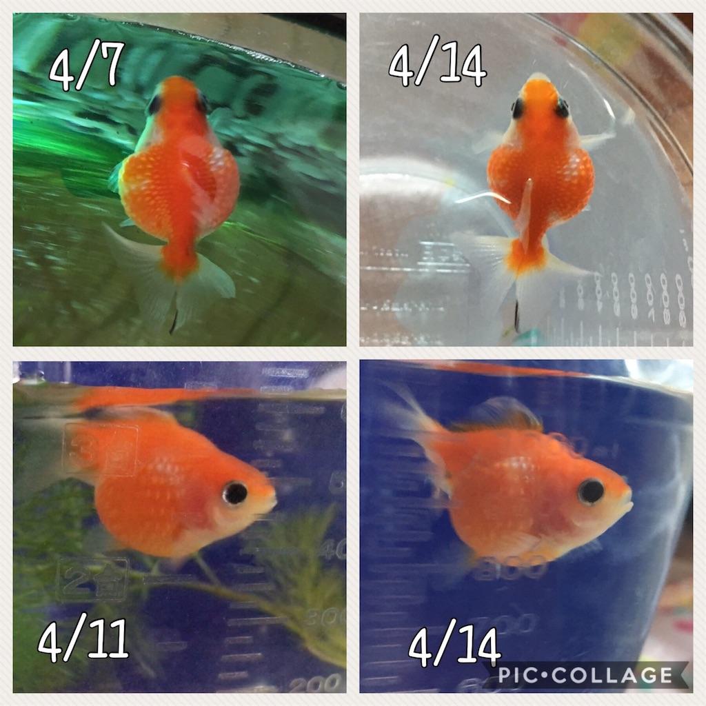 f:id:prettyfish:20170414102721j:image