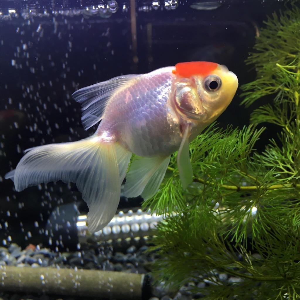 f:id:prettyfish:20170417153804j:image