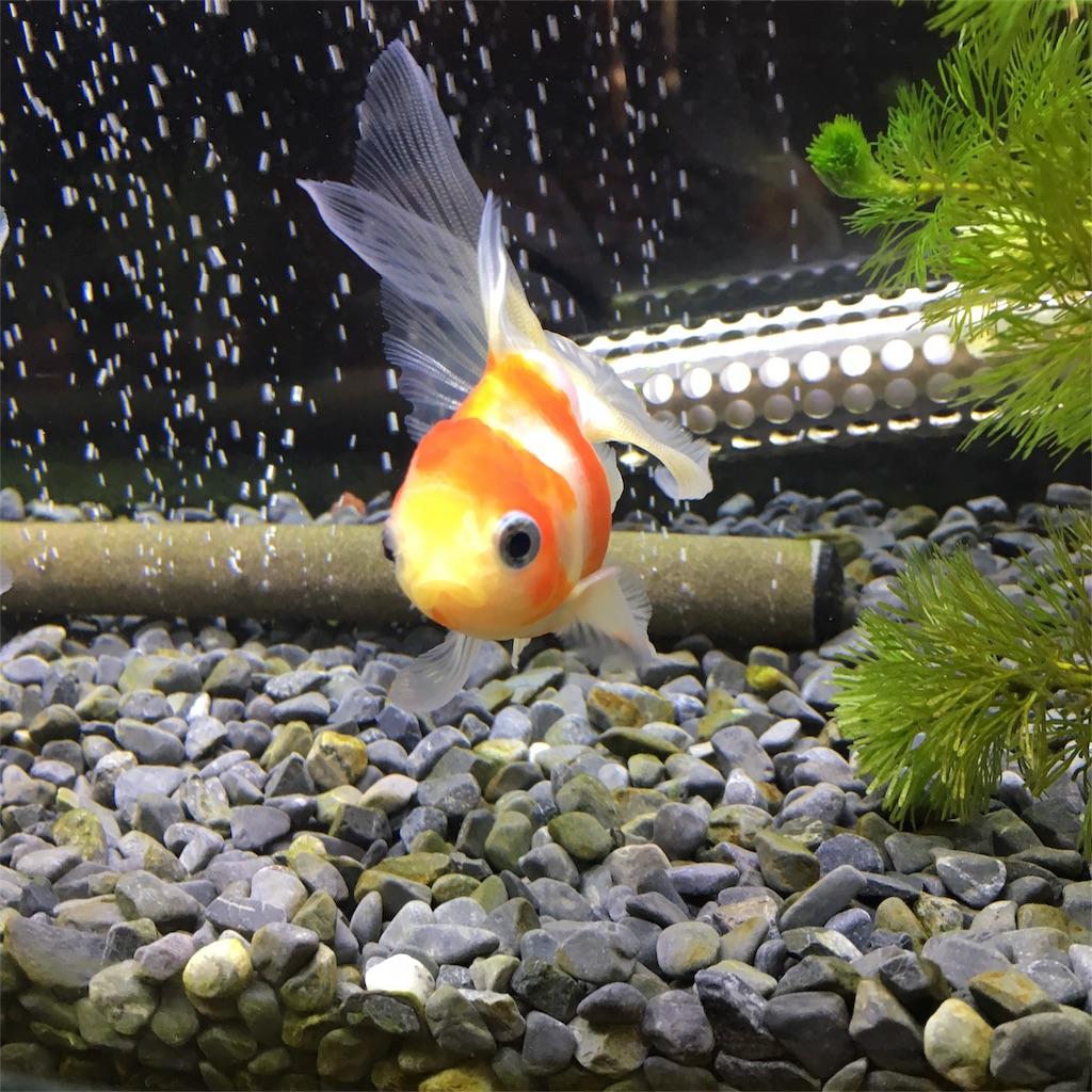 f:id:prettyfish:20170417153820j:image