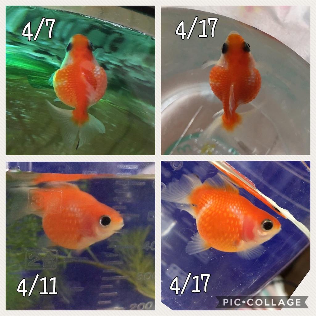 f:id:prettyfish:20170417154631j:image