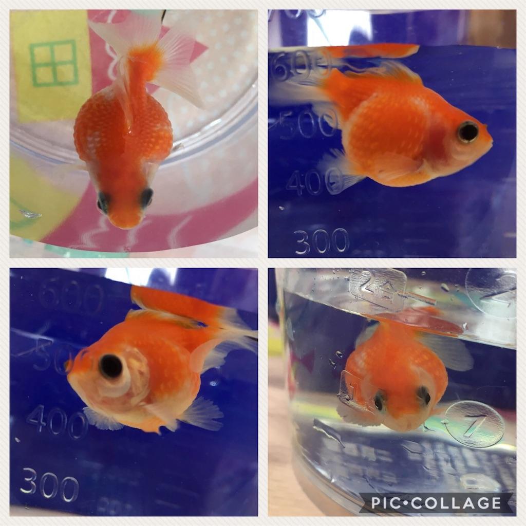 f:id:prettyfish:20170424105047j:image