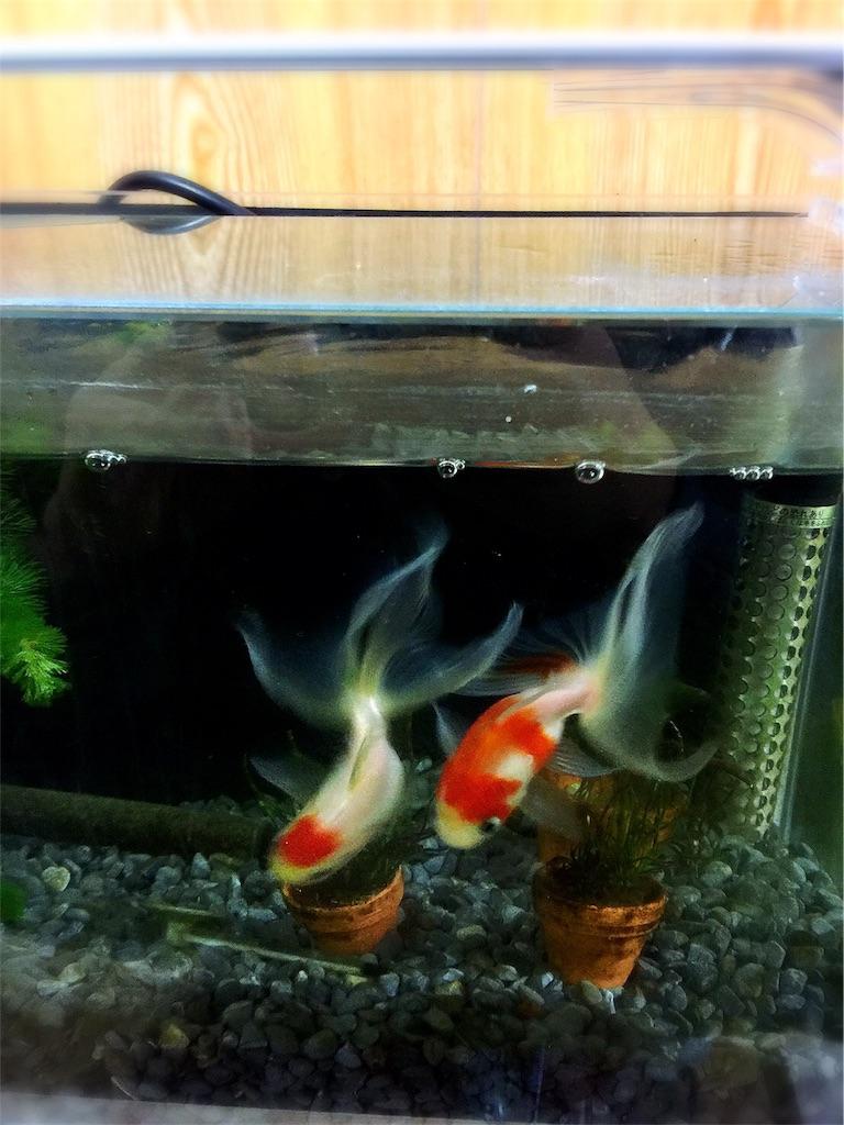 f:id:prettyfish:20170525230247j:image