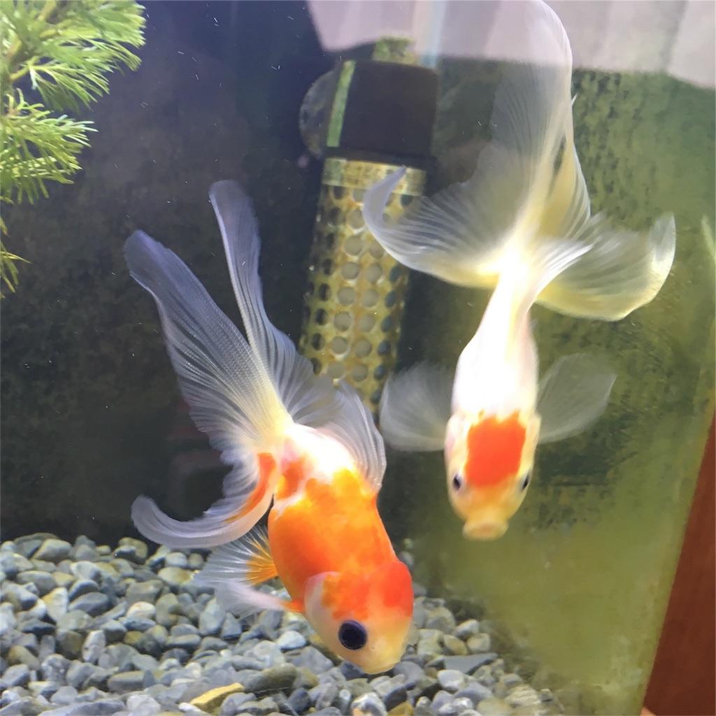 f:id:prettyfish:20170609124611j:image
