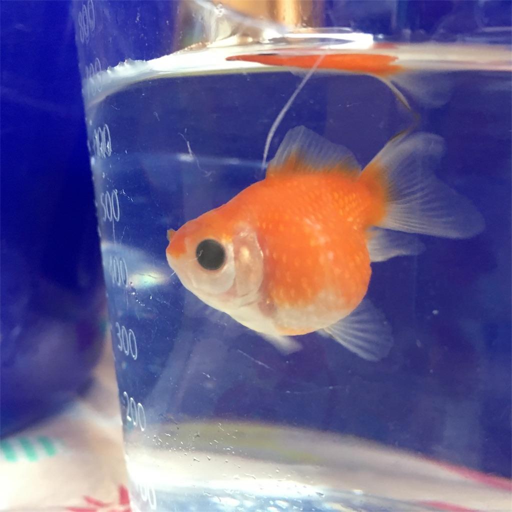 f:id:prettyfish:20170611154404j:image