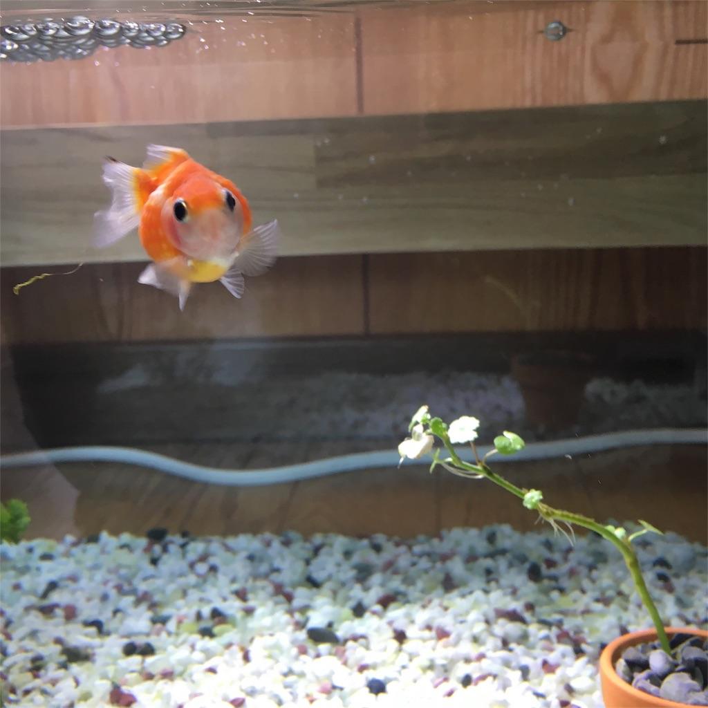f:id:prettyfish:20170614120914j:image
