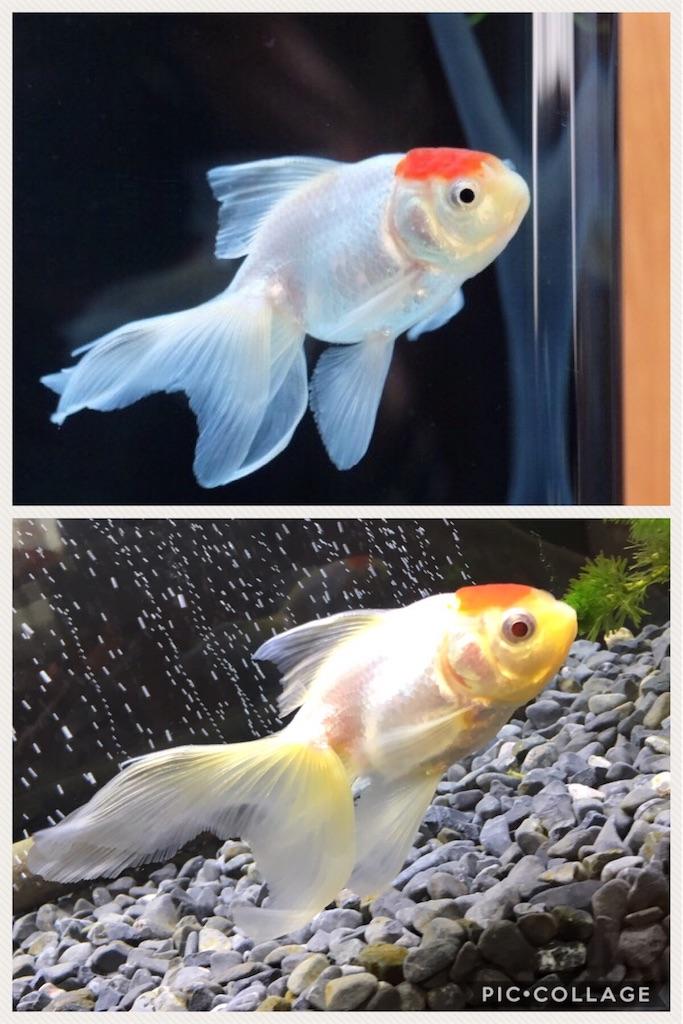f:id:prettyfish:20170620114303j:image
