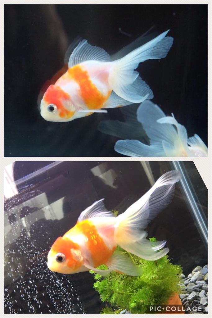 f:id:prettyfish:20170620114310j:image