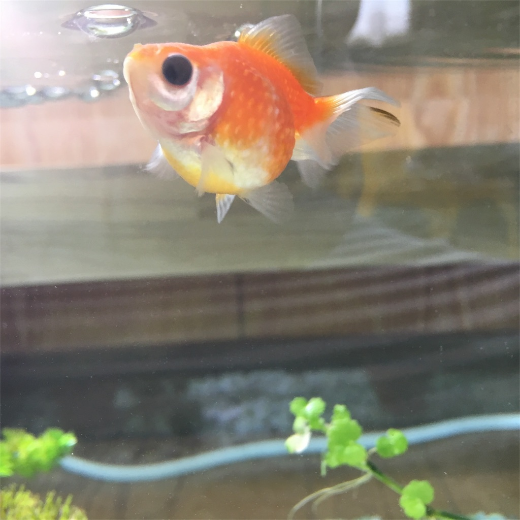f:id:prettyfish:20170620114443j:image