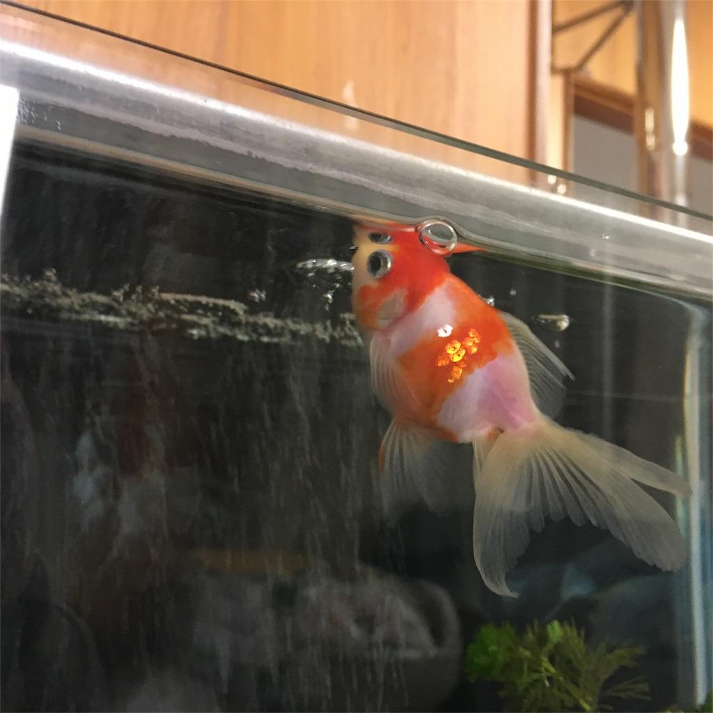 f:id:prettyfish:20170623221831j:image