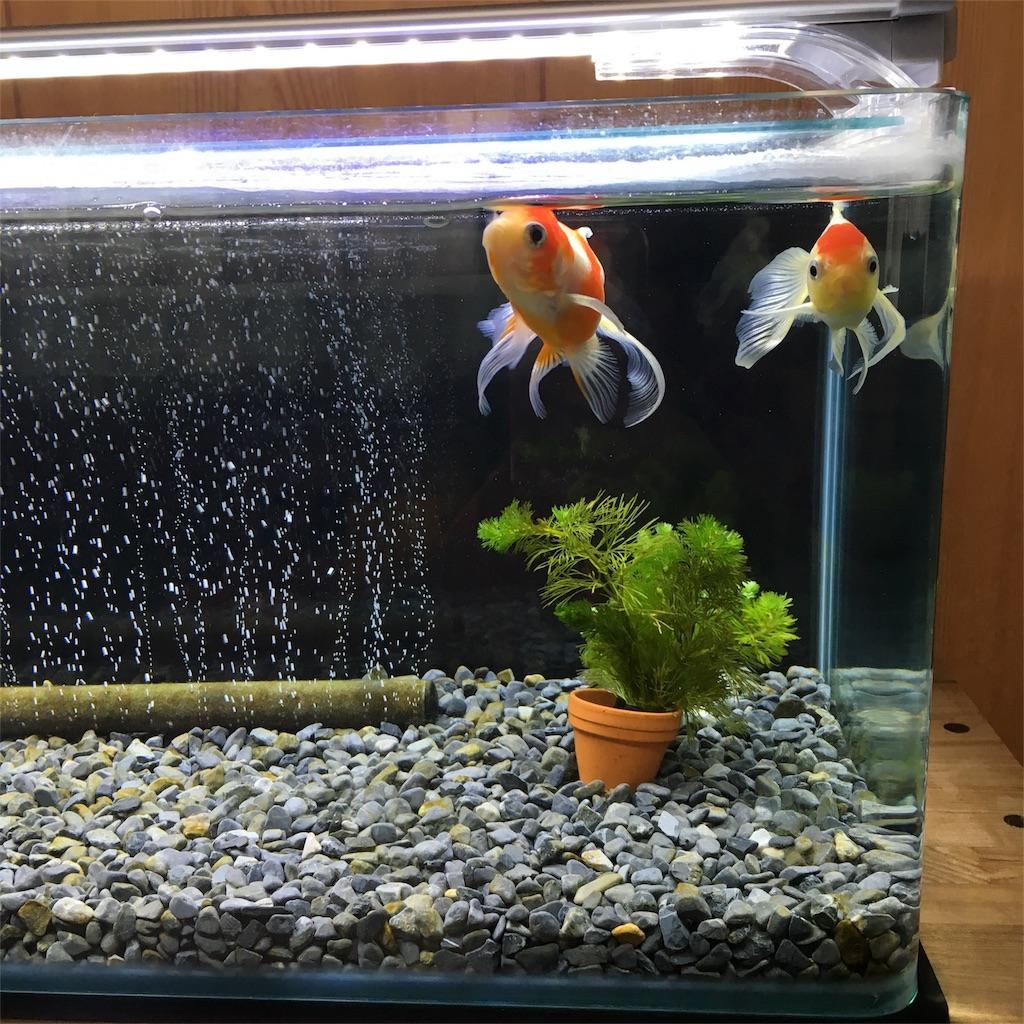 f:id:prettyfish:20170624191024j:image