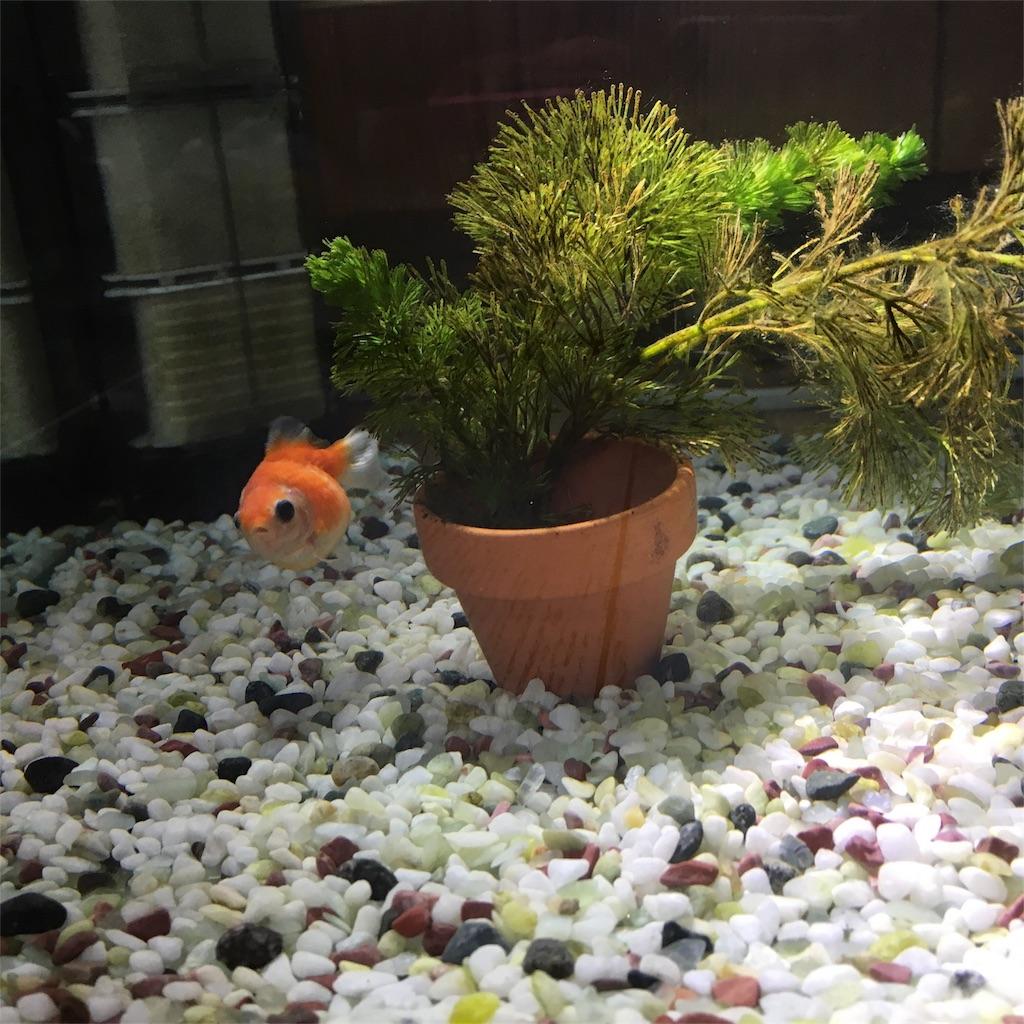 f:id:prettyfish:20170624191055j:image