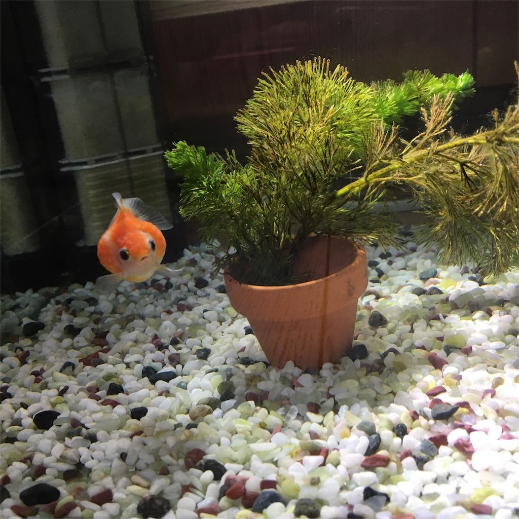 f:id:prettyfish:20170624191109j:image