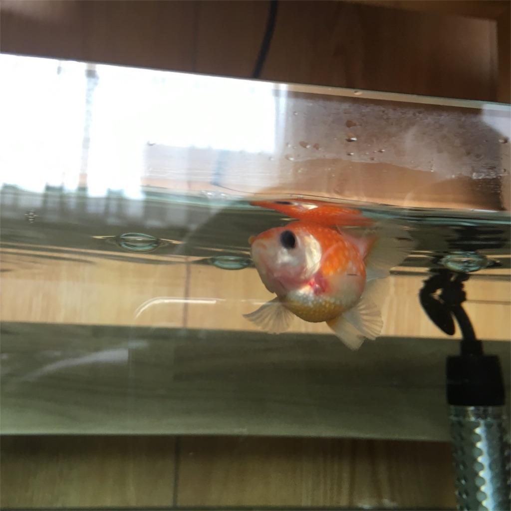 f:id:prettyfish:20170629211824j:image