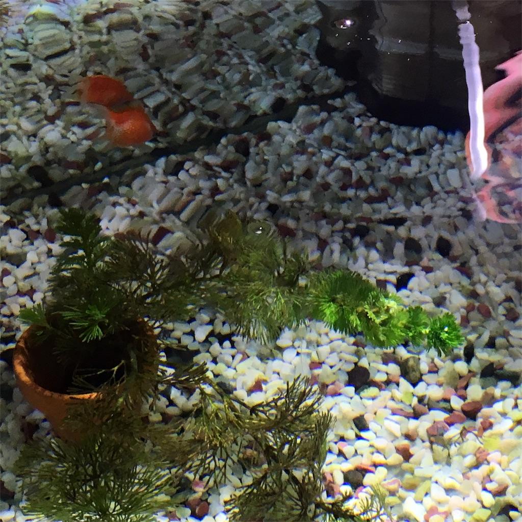f:id:prettyfish:20170707235948j:image