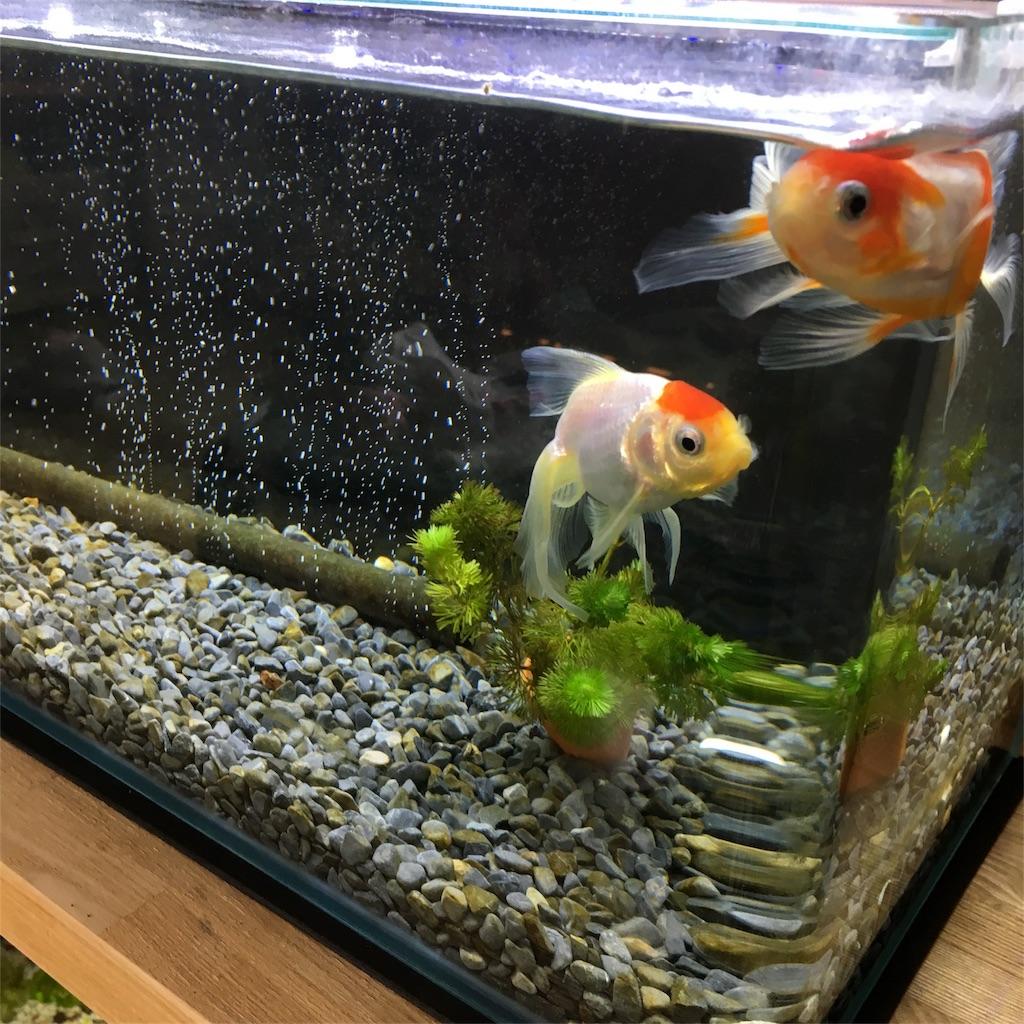 f:id:prettyfish:20170708000122j:image