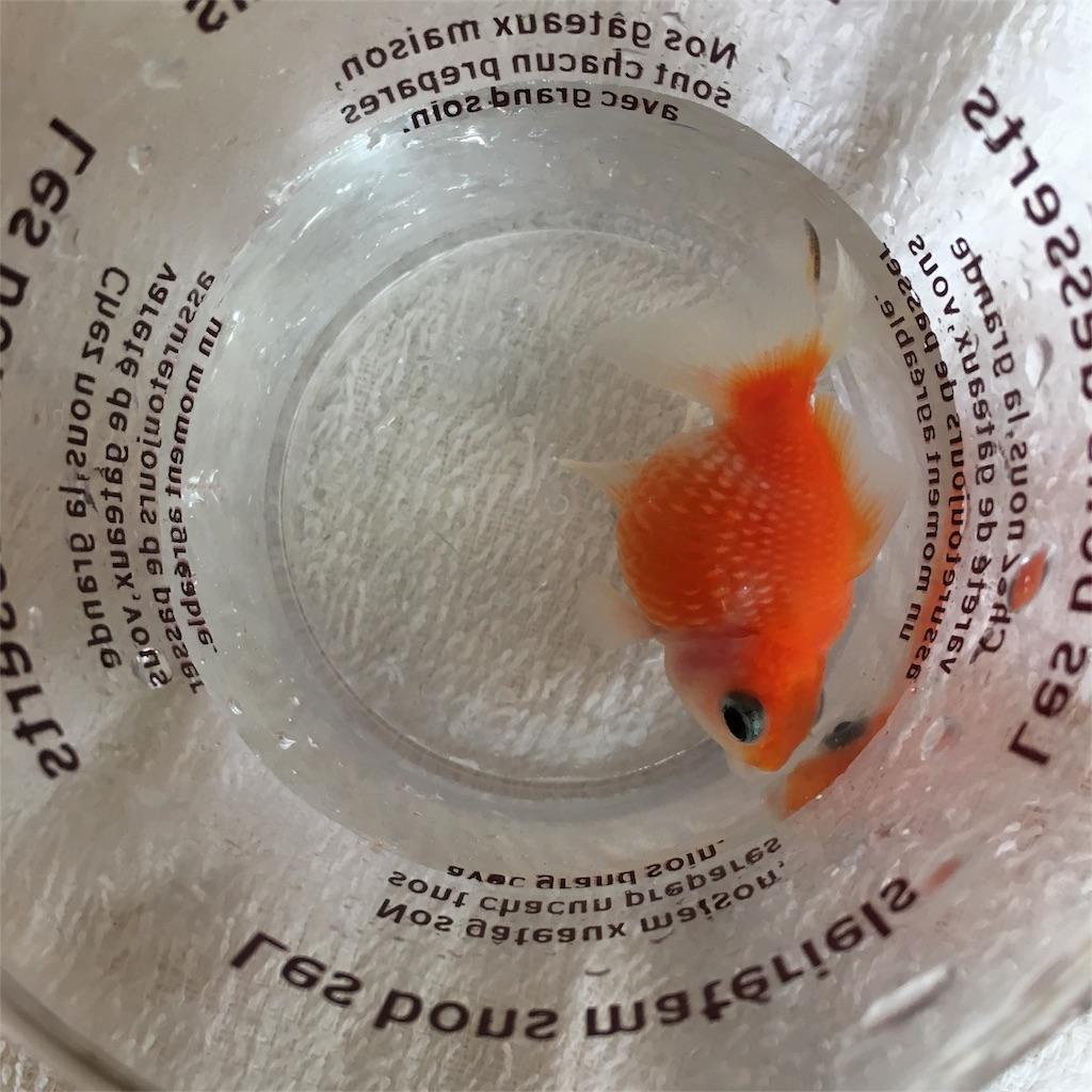 f:id:prettyfish:20170717210834j:image