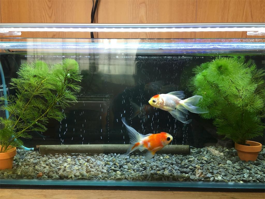 f:id:prettyfish:20170901161532j:image