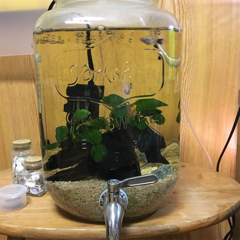 f:id:prettyfish:20171008200120j:image