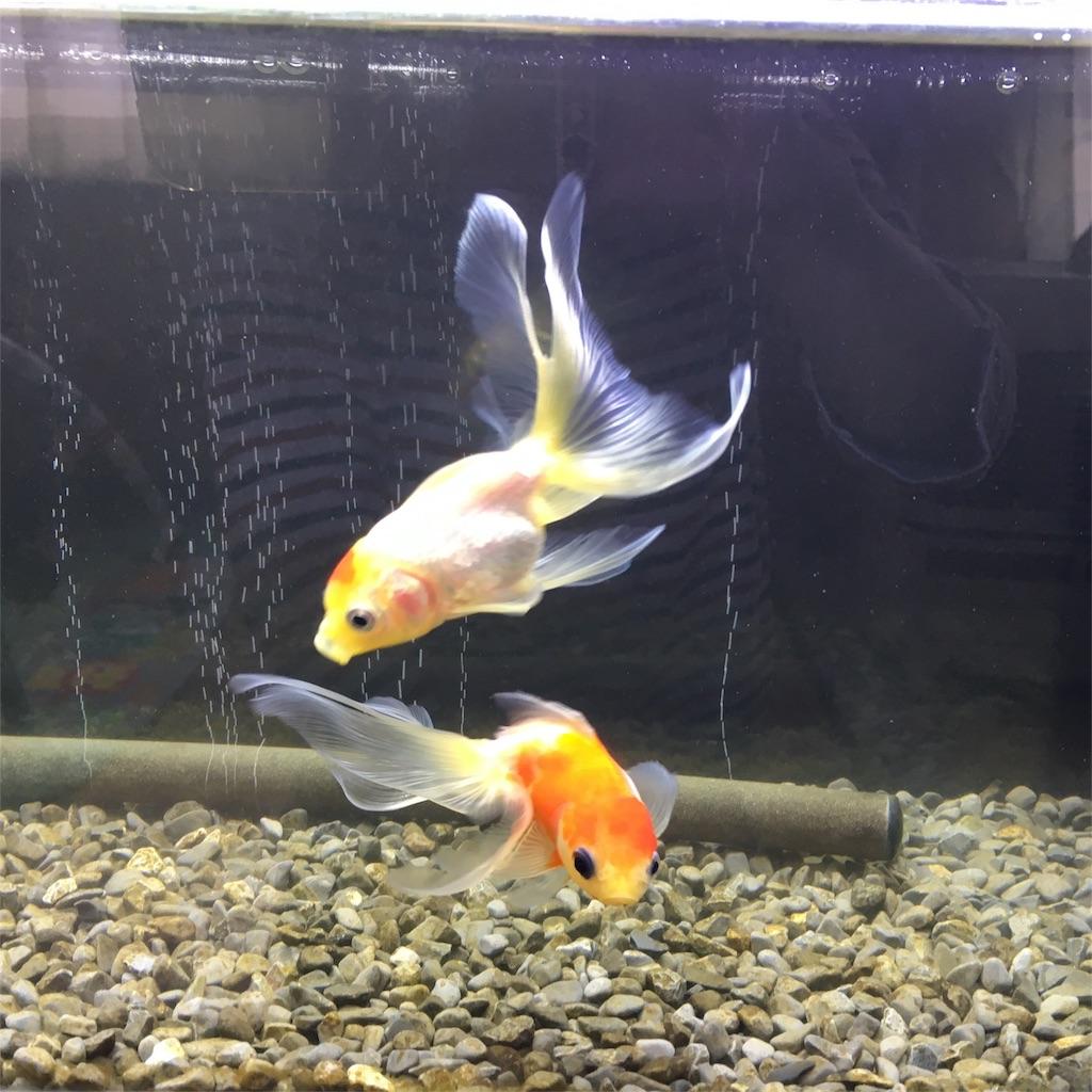 f:id:prettyfish:20171124130524j:image