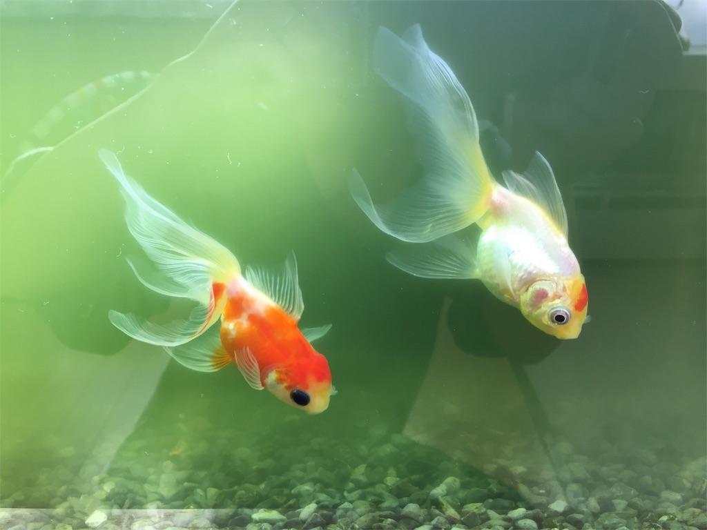 f:id:prettyfish:20171221125046j:image