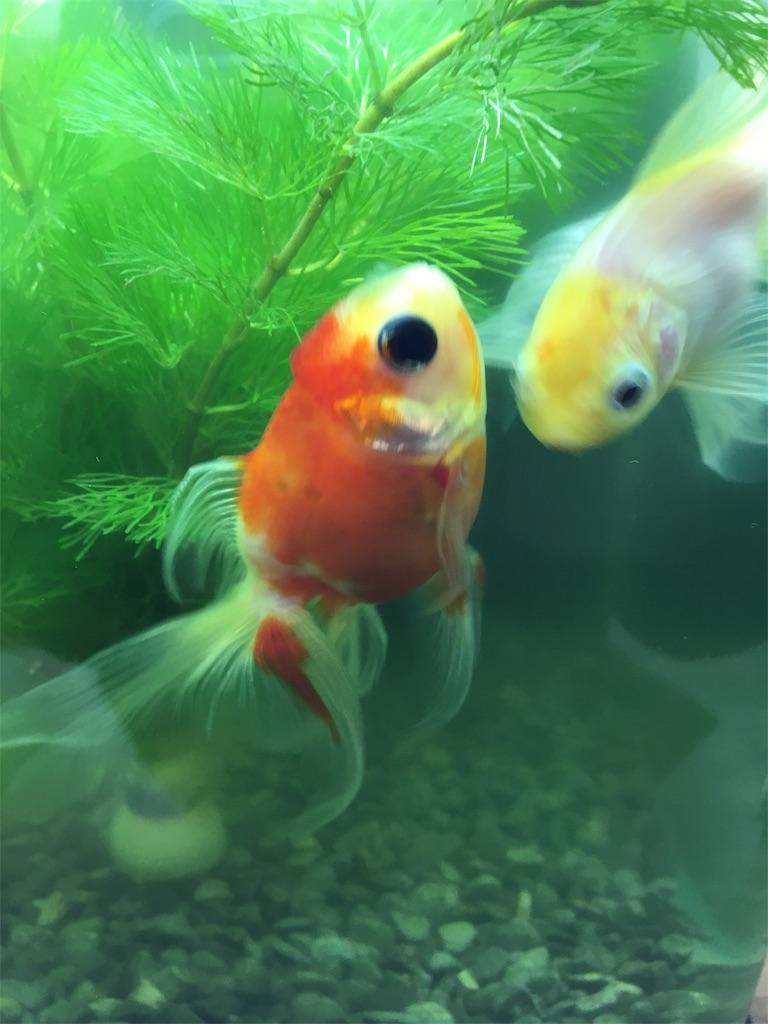 f:id:prettyfish:20180104060708j:image