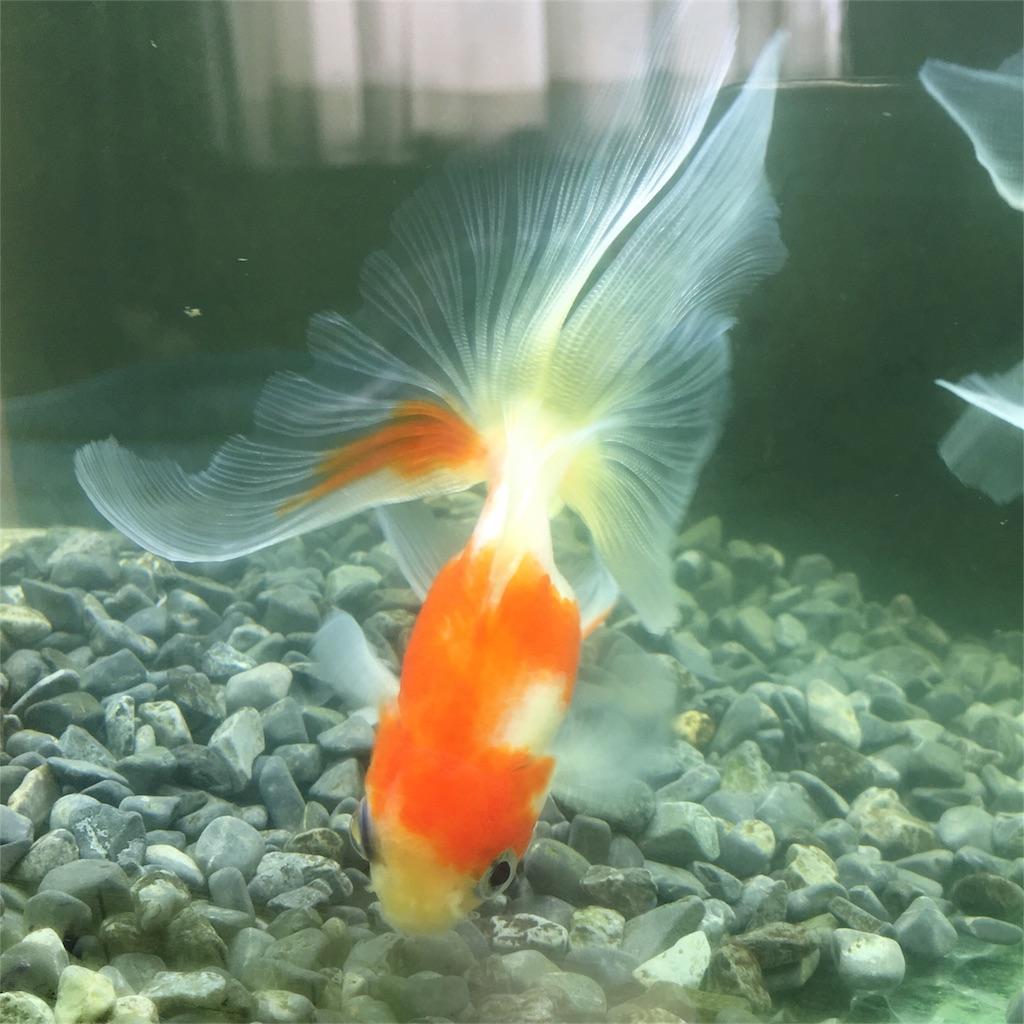 f:id:prettyfish:20180319112331j:image