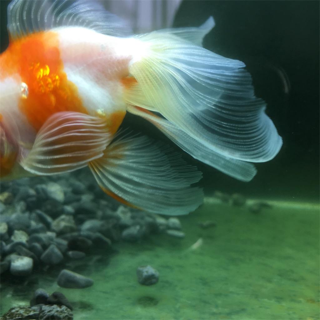 f:id:prettyfish:20180319113234j:image