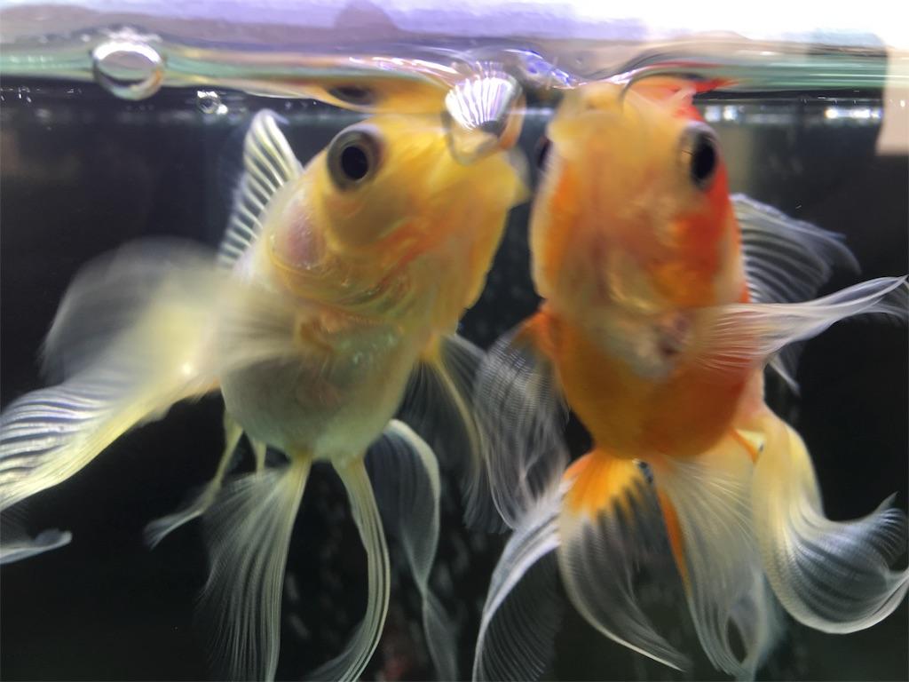f:id:prettyfish:20180331195830j:image