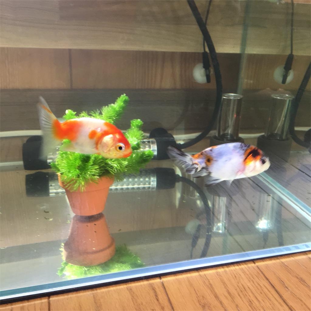 f:id:prettyfish:20180331195851j:image