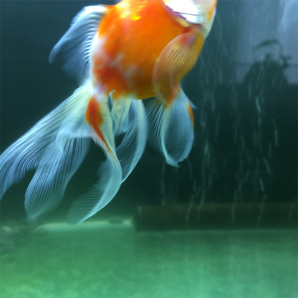 f:id:prettyfish:20180407141141j:image