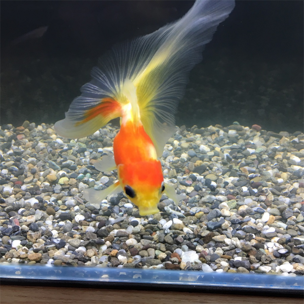 f:id:prettyfish:20180524142336j:image