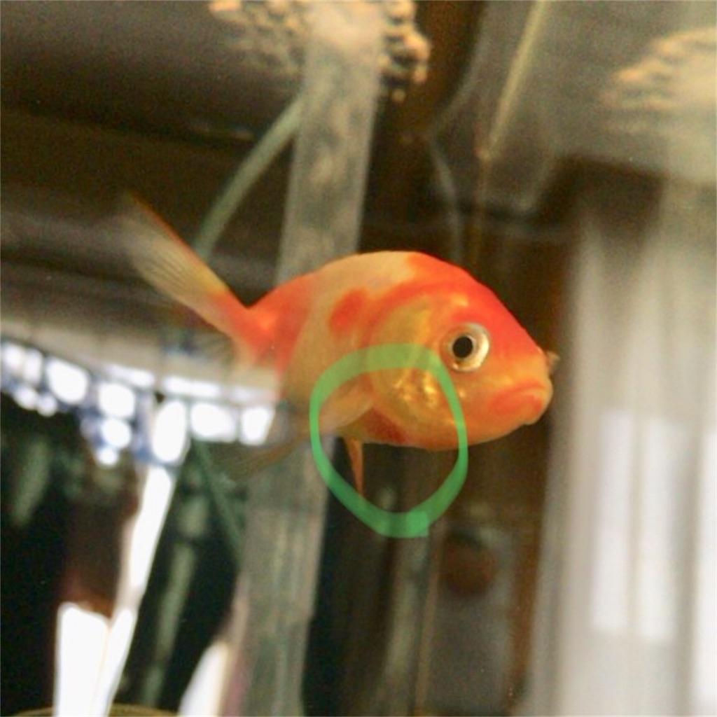 f:id:prettyfish:20180629095333j:image