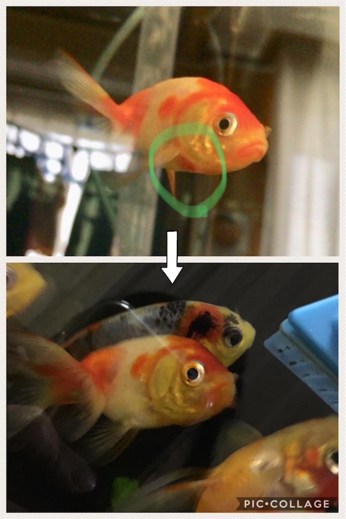 f:id:prettyfish:20180704151333j:image