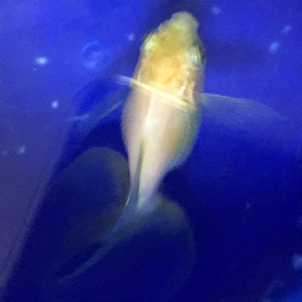 f:id:prettyfish:20180810151209j:image