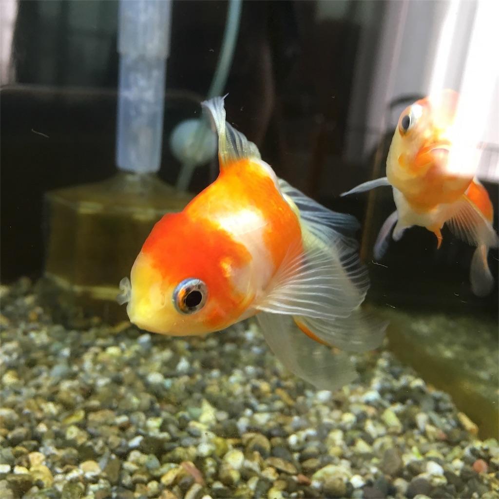 f:id:prettyfish:20180913142929j:image