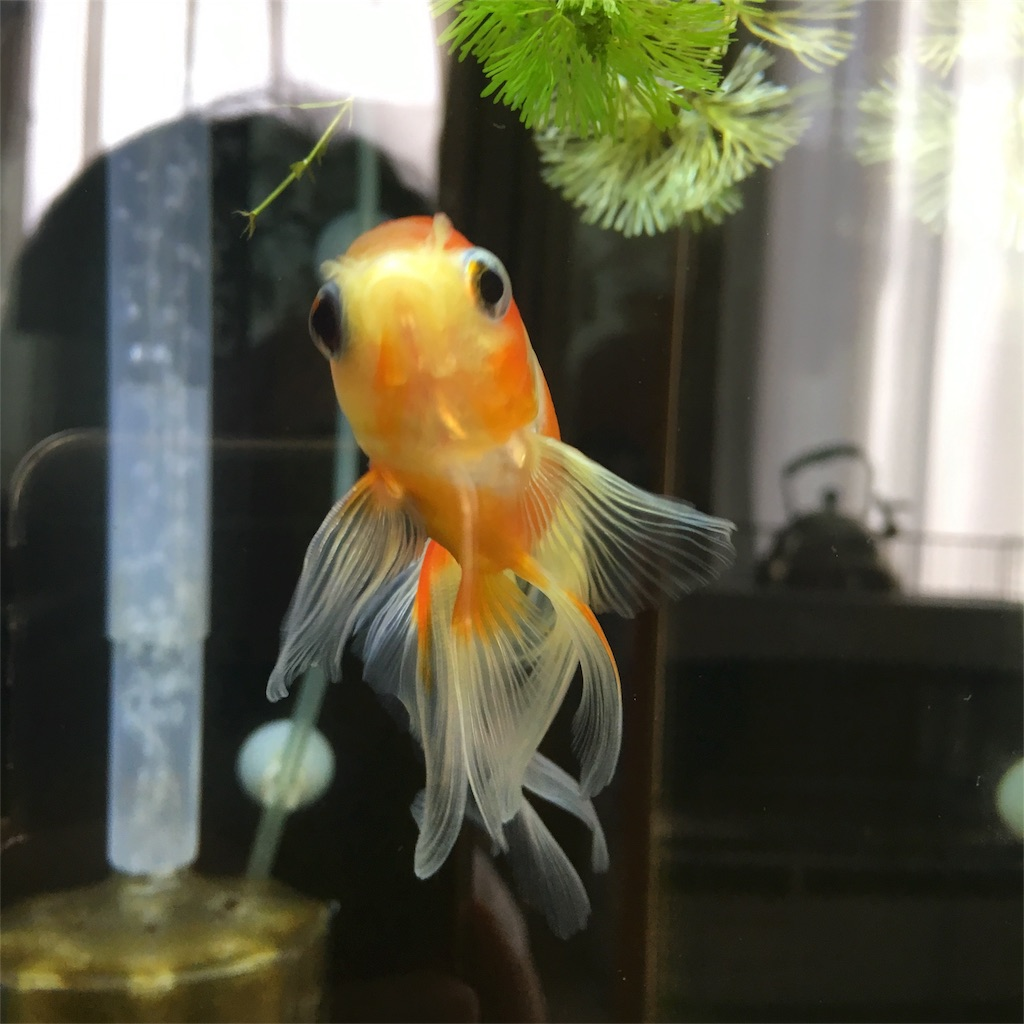 f:id:prettyfish:20180913143000j:image