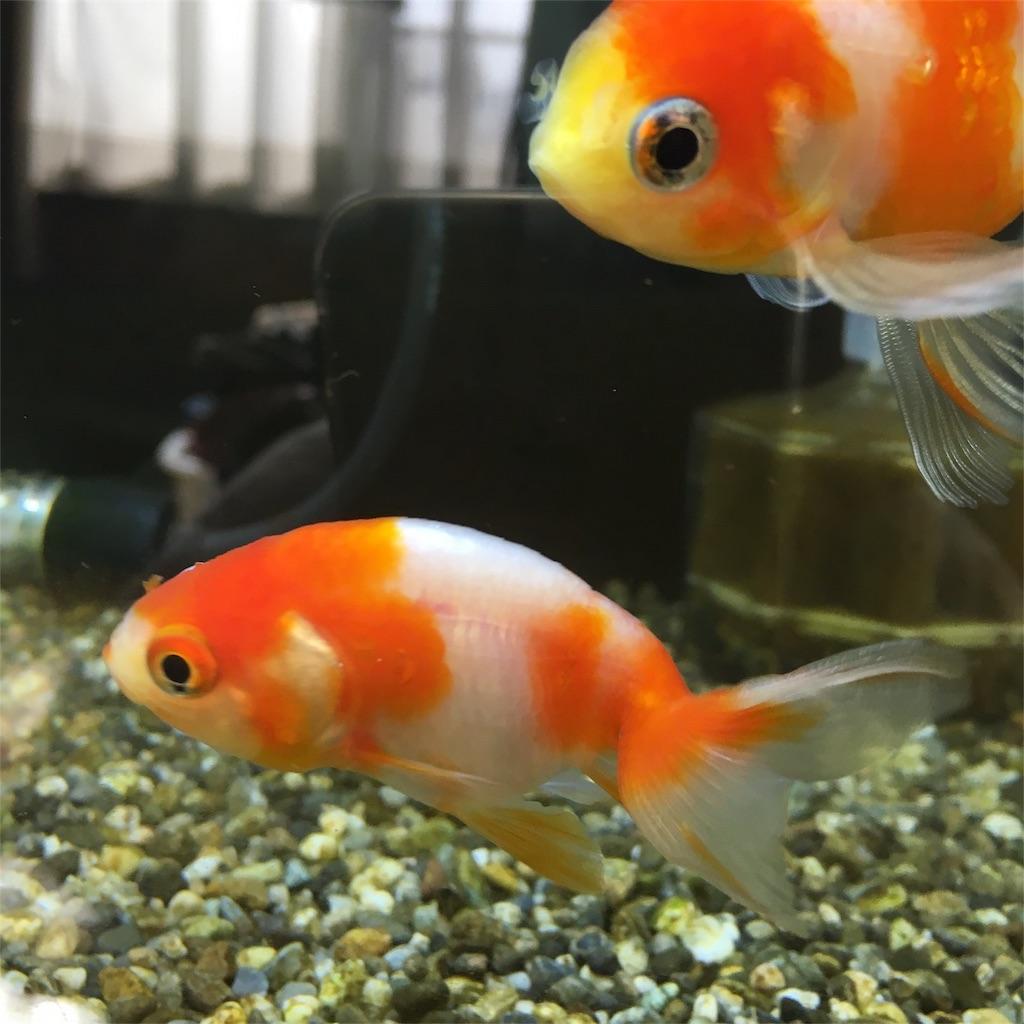 f:id:prettyfish:20180913143228j:image