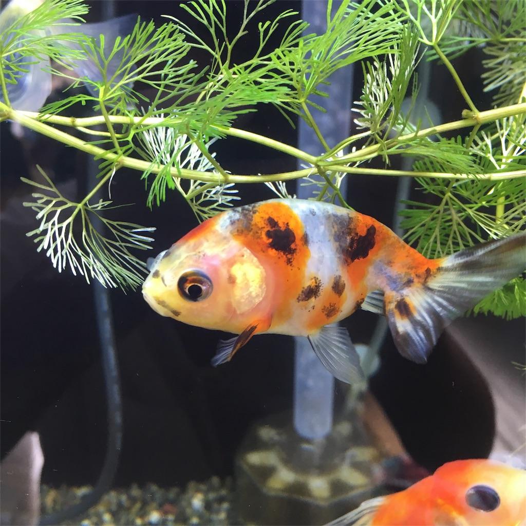 f:id:prettyfish:20180913143357j:image