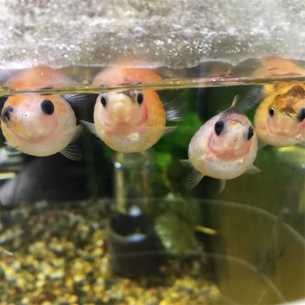 f:id:prettyfish:20180913143506j:image