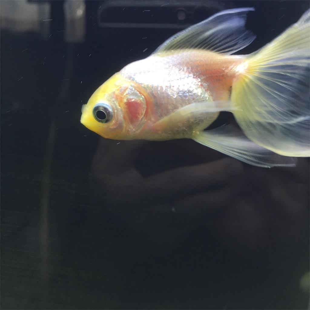 f:id:prettyfish:20181002155038j:image