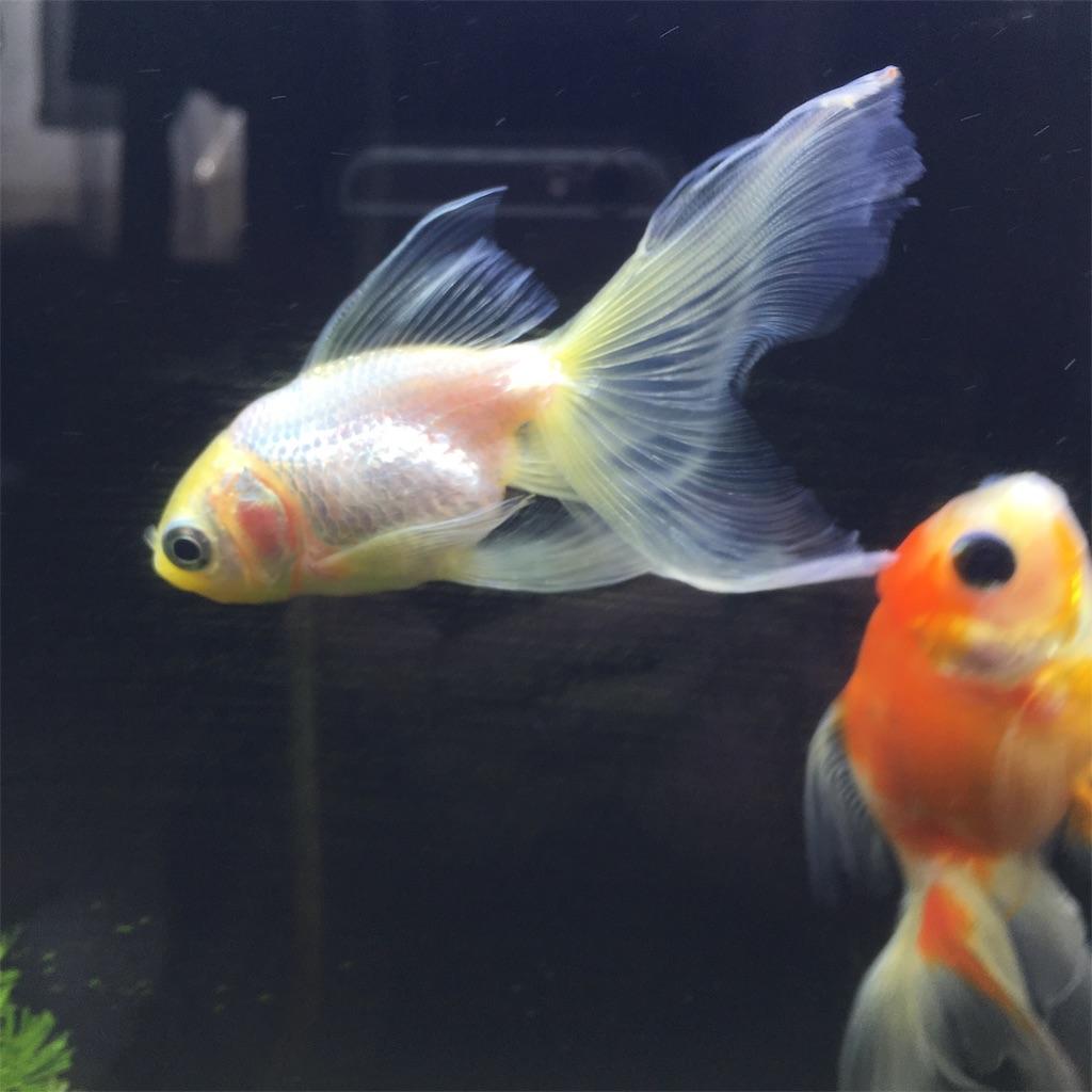 f:id:prettyfish:20181002155102j:image