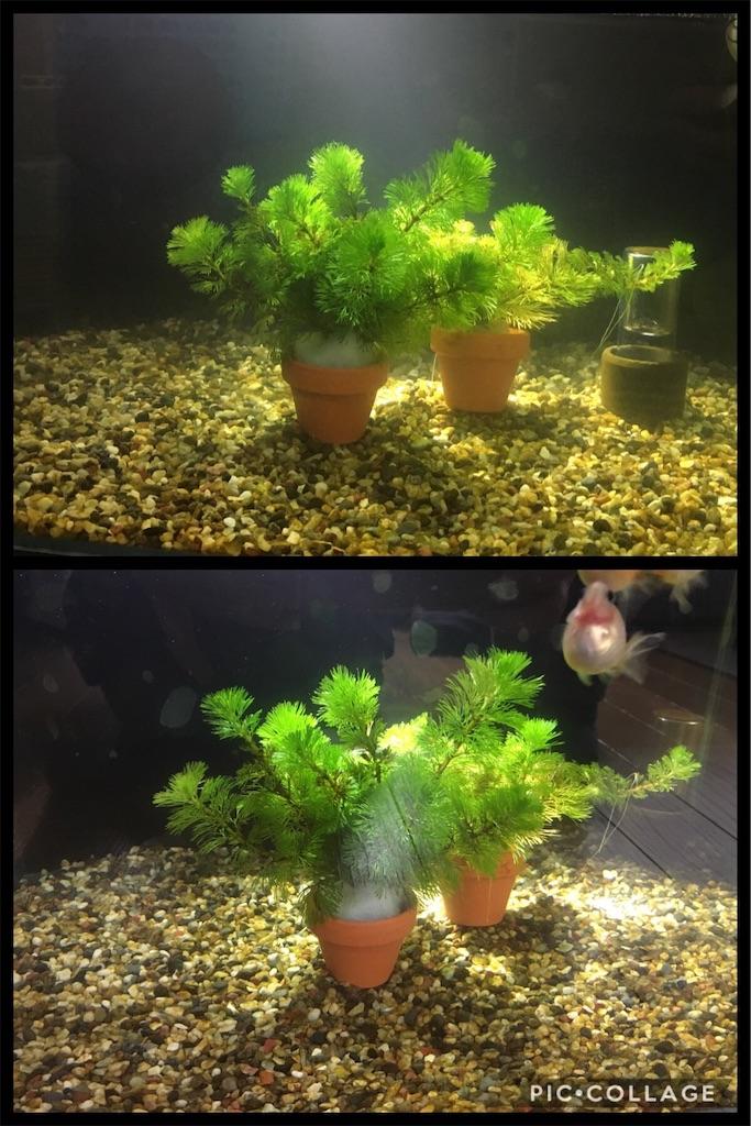 f:id:prettyfish:20181012083020j:image