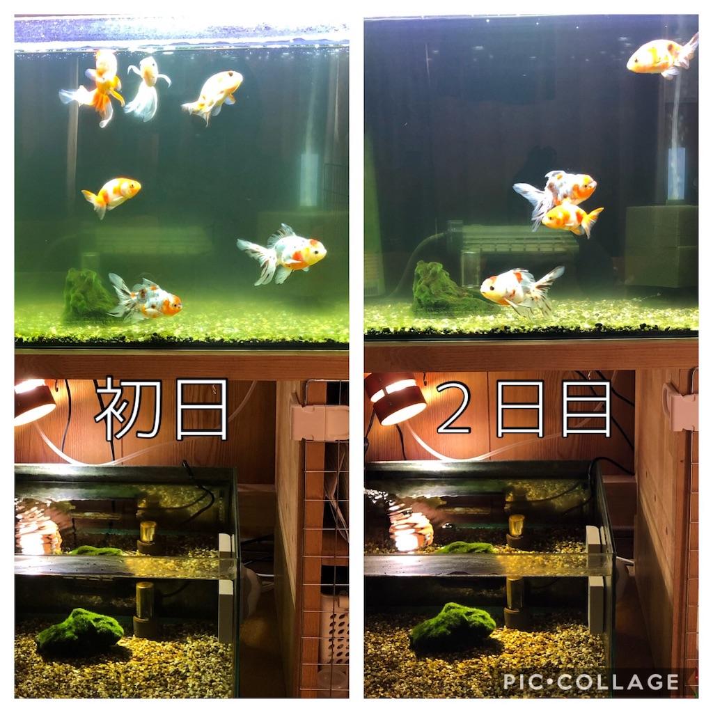 f:id:prettyfish:20190409124612j:image